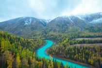 林权证的变更和转让需要什么手续